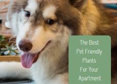The Best Pet Friendly Plants For Your Apartment