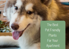 The Best Pet Friendly Plants For Your Apartment