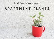 Apartment Home Plants