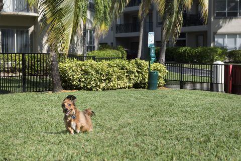 Dog Park at Camden Aventura Apartments in Aventura, FL