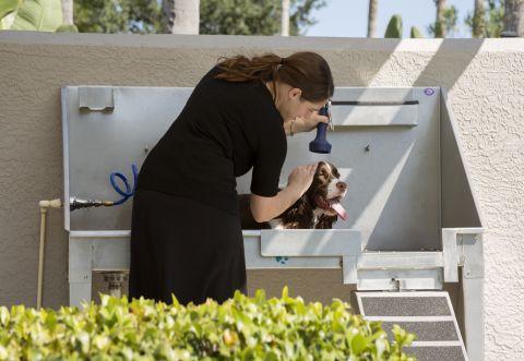 Dog Wash Station at Camden Bay Apartments in Tampa, FL