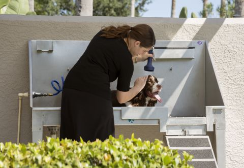 Dog Wash Station at Camden Bay Apartments in Tampa, FL