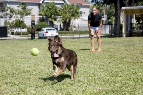 Dog Park at Camden Bay Apartments in Tampa, FL