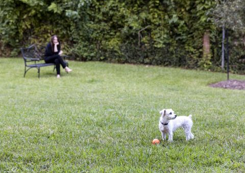 Dog Park at Camden Belmont Apartments in Dallas, TX
