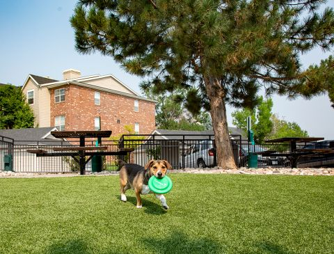 Dog park at Camden Caley Apartments in Englewood, CO