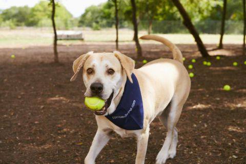 Large Fenced-In Dog Park Onsite at Camden Cedar Hills Apartments in Austin, TX