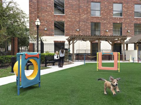 Dog Park with Agility Equipment at Camden City Centre Apartments in Houston, TX