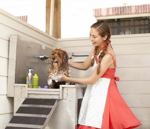 Dog Wash Station at Camden City Centre Apartments in Houston, TX