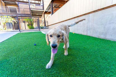 Dog Park at Camden Copper Square Apartments in Phoenix, AZ