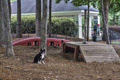 Dog Park at Camden Crest Apartments in Raleigh, NC