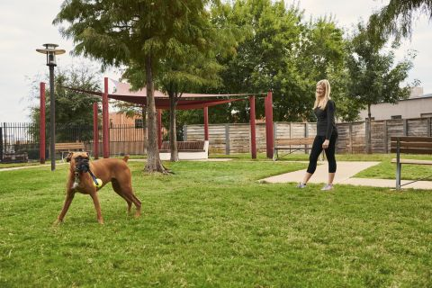 Dog Park at Camden Design District Apartments in Dallas, TX