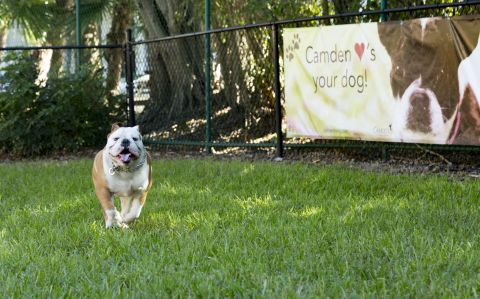 Dog Park at Camden Doral Apartments in Doral, FL