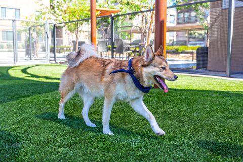 Dog Park at Camden Foothills Apartments in Scottsdale, AZ