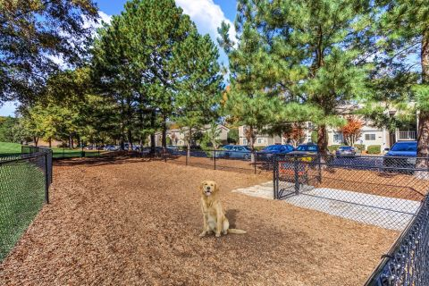 Dog Park at Camden Foxcroft in Charlotte, North Carolina