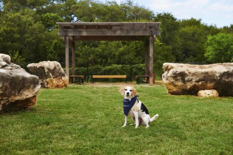 Dog park at Camden Gaines Ranch Apartments in Austin, TX