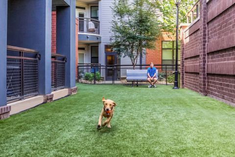 Dog park at Camden Gallery Apartments in Charlotte, NC