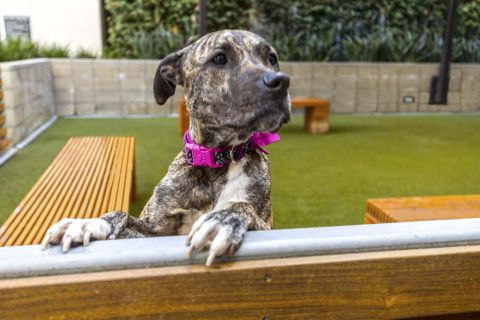 Private Off-Leash Dog Park with Seating Areas at Camden Glendale Apartments in Glendale, CA