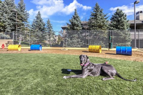 Private Dog Park at Camden Highlands Ridge Apartments in Highlands Ranch, CO