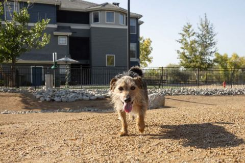 Dog Park at Camden Lakeway Apartments in Lakewood, CO