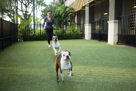 Dog Park at Camden Las Olas Apartments in Fort Lauderdale, FL
