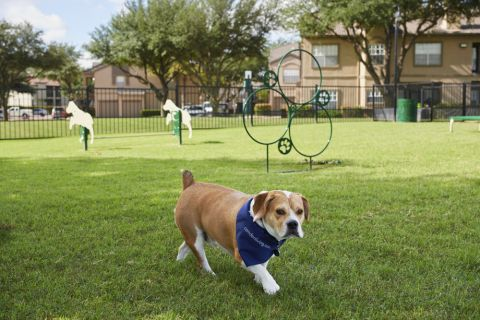 Dog park at Camden Legacy Creek Apartments in Plano, TX