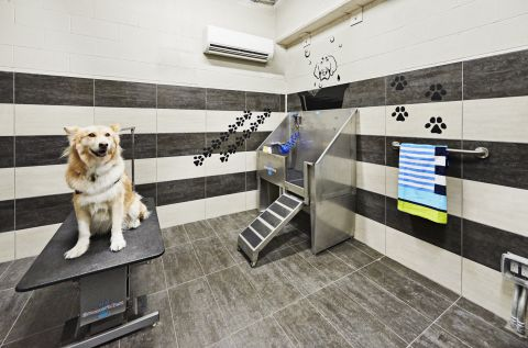 Private Dog Spa at Camden Lincoln Station Apartments in Lone Tree, CO