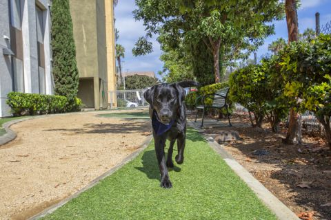 Dog Park with Green Grass at Camden Main and Jamboree Apartments in Irvine, CA