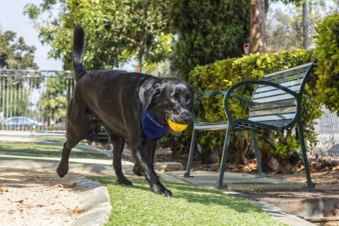 Dog Park with Shaded Seating at Camden Main and Jamboree Apartments in Irvine, CA