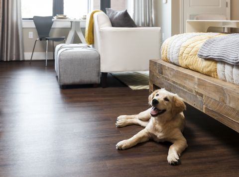 Pet Friendly Apartments at Camden NoMa Apartments in Washington, DC