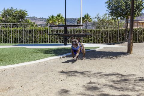 Dog Park at Camden Old Creek Apartments in San Marcos, CA