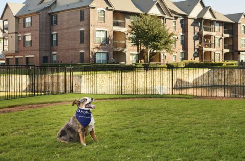 Dog park at Camden Panther Creek apartments Frisco, TX