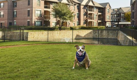 Bark park at Camden Panther Creek apartments Frisco, TX