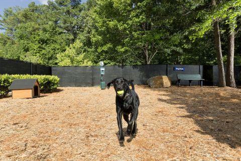 Dog Park at Camden Peachtree City Apartments in Peachtree City, GA