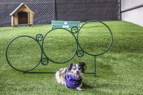 Dog Park with Agility Equipment at Camden Phipps Apartments in Atlanta, GA