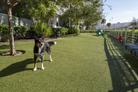 Dog Park at Camden Pier District Apartments in St. Petersburg, FL