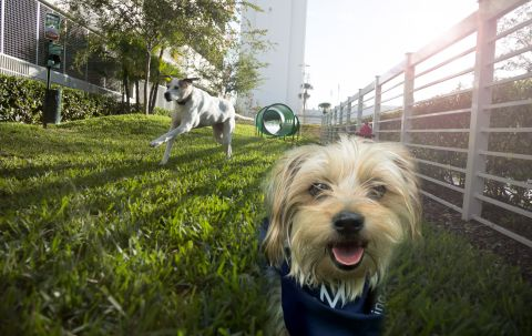 Pet Friendly Dog Park at Camden Pier District Apartments in St. Petersburg, FL