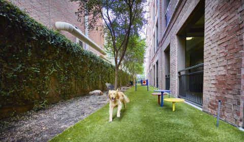 Pet-friendly community with dog run