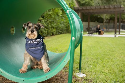 Dog Park with Agility Equipment at Camden Post Oak Apartments in Houston, TX