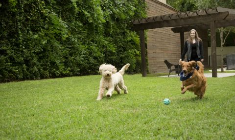 Large Dog Park with Room to Run at Camden Post Oak Apartments in Houston, TX
