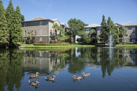 Pond View at Camden Preserve Apartments in Tampa, FL