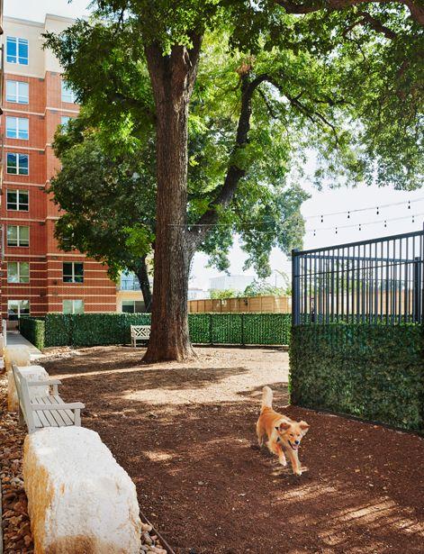 Bark Park at Camden Rainey Street apartments in Austin, TX
