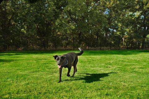 Dog Park at Camden Riverwalk Apartments in Grapevine, TX