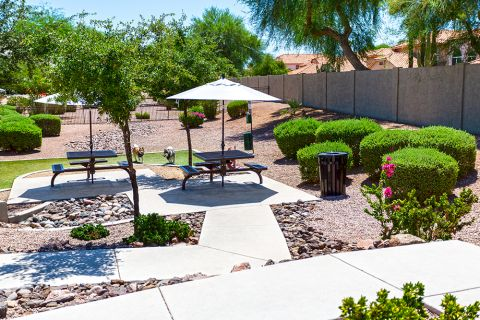 Spacious Dog Park with Covered Seating at Camden San Marcos Apartments in Scottsdale, AZ
