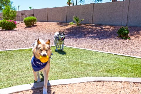 Dog Park at Camden San Marcos Apartments in Scottsdale, AZ