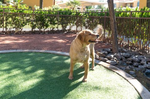 Dog Park at Camden San Paloma Apartments in Scottsdale, AZ