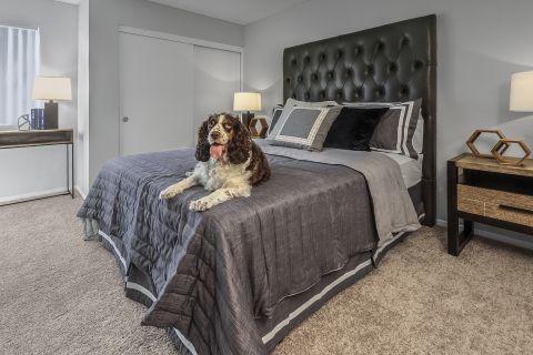 Pet friendly apartments at Camden Sea Palms Apartments in Costa Mesa, CA