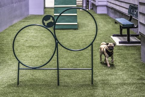 Private Bark Park with Agility Equipment at Camden Shady Grove Apartments in Rockville, MD