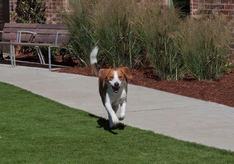 Dog park at Camden Southline apartments in Charlotte, NC
