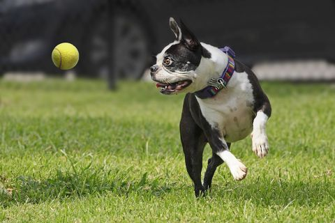 Private Off-Leash Dog Park at Camden Spring Creek Apartments in Spring and The Woodlands, TX