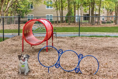 Dog Park at Camden Touchstone Apartments in Charlotte, NC